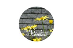 Trädgård för Doronicum på våren Royaltyfri Foto