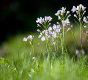 Trädgård för knäpp blomma Fotografering för Bildbyråer