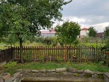 Trädgård för naturgräsplanäpple royaltyfria foton
