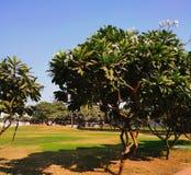 Trädgård för November 2018 magnoliaträd arkivfoto