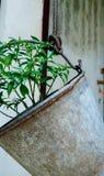 Trädgård för stålbehållare Arkivfoton