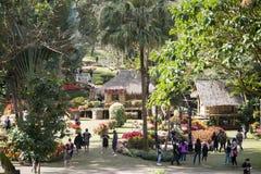 TRÄDGÅRD FÖR THAILAND CHIANG RAI DOI TUNG MEA FAHRENHEIT LUANG royaltyfria foton