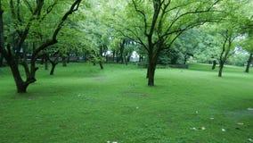 Trädgård för valnötträd nära Gulmarg-II Royaltyfria Bilder