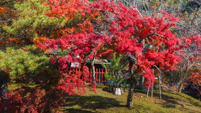 Trädgård framme av den Todaiji templet i Nara Arkivfoto