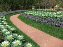 Trädgård i AngKhang Royaltyfria Bilder