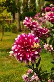 Trädgård i Chitwan, Nepal Royaltyfri Bild