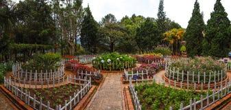 Trädgård i Dalat Arkivbilder