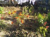 Trädgård i den Batasia öglan arkivfoto