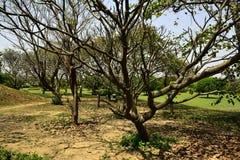 Trädgård i den Indien Lotos templet Arkivbild