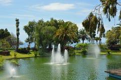 Trädgård i Funchal fotografering för bildbyråer