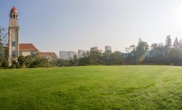 Trädgård i gräset Arkivfoto