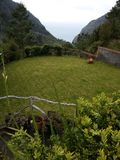 Trädgård i landshus Arkivfoto