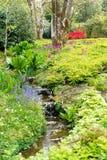 Trädgård i sommar med vattenkaskaden royaltyfri bild