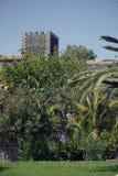 Trädgård i Tenerife Arkivfoto