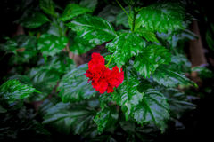 Trädgård i Thailand Chatuchak 5 Royaltyfria Foton
