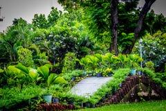 Trädgård i Thailand Chatuchak 40 Arkivfoto