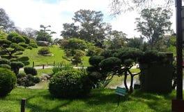 Trädgård japanska Argentina fotografering för bildbyråer