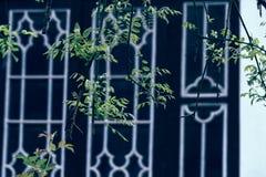 Trädgård-klassiska trädgårdar för vår av Suzhou Royaltyfri Fotografi