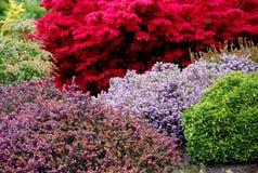 trädgård landskap fjäder Royaltyfria Bilder