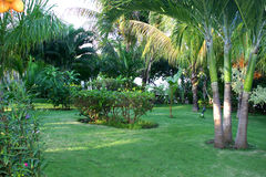 trädgård landskap tropiskt fotografering för bildbyråer