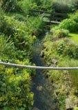 Trädgård med en flod Royaltyfri Foto