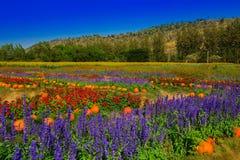 Trädgård med färgrika blommaberg Arkivbild