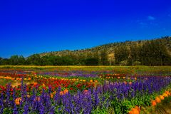 Trädgård med färgrika blommaberg Fotografering för Bildbyråer