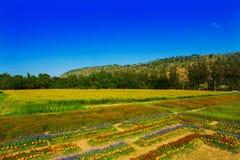 Trädgård med färgrika blommaberg Arkivbilder
