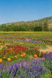 Trädgård med färgrika blommaberg Arkivfoton
