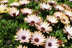 Trädgård med härliga blommor Royaltyfri Bild
