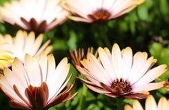 Trädgård med härliga blommor Royaltyfria Bilder