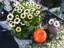 Trädgård med härliga blommor med mini- ugglor och pumpa royaltyfri foto