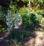 Trädgård med hemlagade blommor nära fruktträd fotografering för bildbyråer