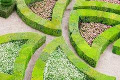 Trädgård med många olika sorter av buxbom royaltyfri fotografi