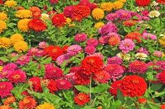 Trädgård med mångfärgat ursnyggt Arkivbild