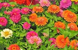 Trädgård med mångfärgat ursnyggt Royaltyfri Fotografi