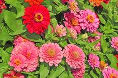Trädgård med mångfärgat ursnyggt Fotografering för Bildbyråer