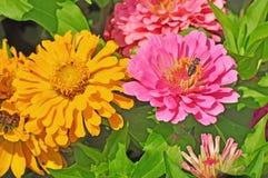Trädgård med mångfärgat ursnyggt Arkivfoton