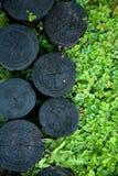 Trädgård med rostiga trän Royaltyfria Foton