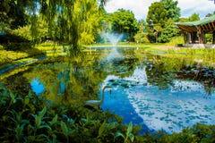 Trädgård med sjön och en svan fotografering för bildbyråer