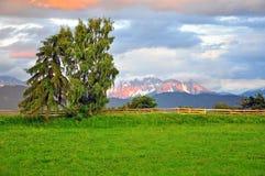 Trädgård med trädet i Dolomites Royaltyfri Bild