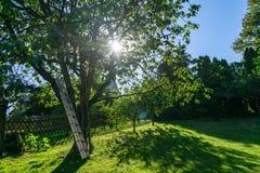 Trädgård med trädet - panelljusplats arkivbild