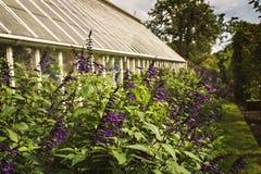 Trädgård med växthuset royaltyfria foton