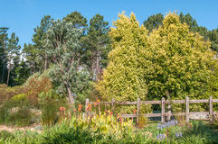 Trädgård nära Sir Lowrys Pass Arkivbild