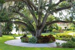 Trädgård och bana Royaltyfri Bild