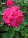 Trädgård på AngKhang Royaltyfri Fotografi