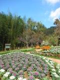 Trädgård på AngKhang Royaltyfri Foto