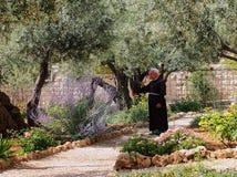 Trädgård på Gethsemane fotografering för bildbyråer
