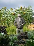Trädgård: scarecrow och grönsaker Arkivfoto