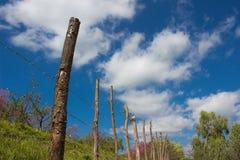Trädgård som omges av ett trästaket Arkivbilder